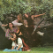 Incredible String Band - CHANGING HORSES -REMAST-